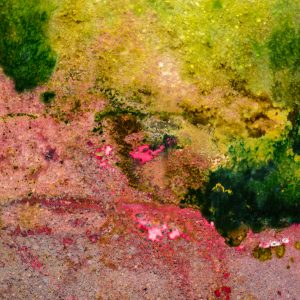 Closeup of pond scum, brighter and multicolored and abstract in shape.