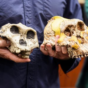 Two skulls being held in two hands.