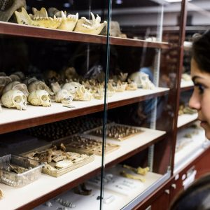 "UW-Madison archaeology field school student Talia Sankari looks at hominid fossils housed at the Phillip V. Tobias Fossil Primate and Hominid Laboratory -- also known as ""the bone vault"" -- during a visit to the University of Witwatersrand in Johannesburg"